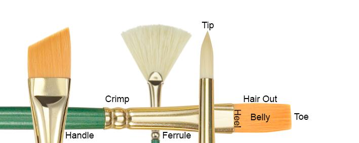 Anatomy of  Brush